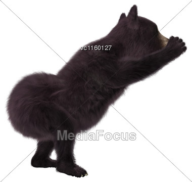 3D Digital Render Of A Black Bear Cub Isolated On White Background Stock Photo