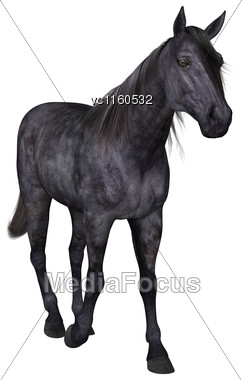 3D Digital Render Of A Black Horse Isolated On White Background Stock Photo