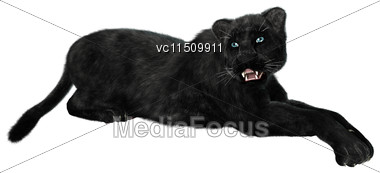 3D Digital Render Of A Black Panther Isolated On White Background Stock Photo