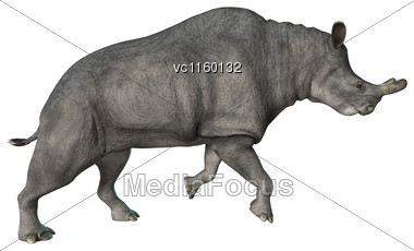 3D Digital Render Of A Brontotherium Or Thunder Beast Isolated On White Background Stock Photo