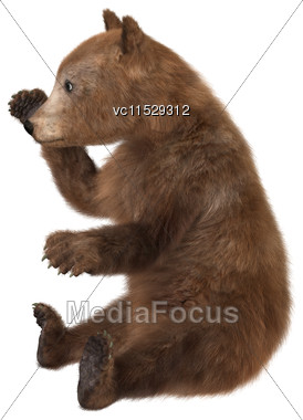 3D Digital Render Of A Brown Bear Cub Isolated On White Background Stock Photo