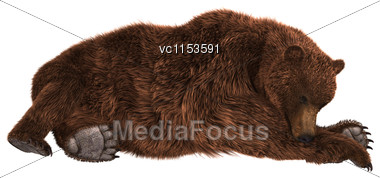 3D Digital Render Of A Brown Grizzly Bear Sleeping Isolated On White Background Stock Photo