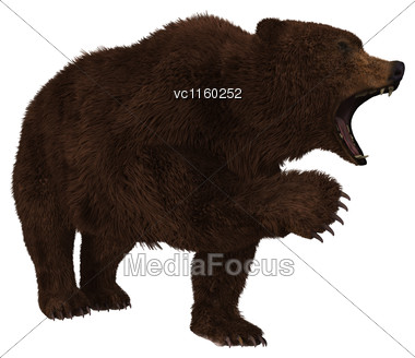 3D Digital Render Of A Brown Grizzly Bear Isolated On White Background Stock Photo