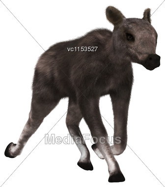 3D Digital Render Of A Caribou Calf Running Isolated On White Background Stock Photo