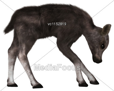 3D Digital Render Of A Caribou Calf Isolated On White Background Stock Photo