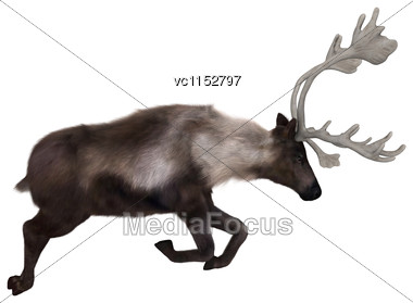 3D Digital Render Of A Caribou Jumping Isolated On White Background Stock Photo