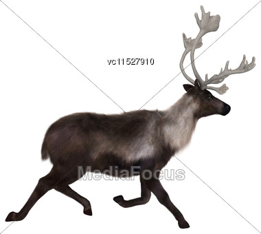 3D Digital Render Of A Caribou Running Isolated On White Background Stock Photo