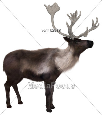 3D Digital Render Of A Caribou Isolated On White Background Stock Photo