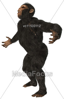 3D Digital Render Of A Chimpanzee Isolated On White Background Stock Photo