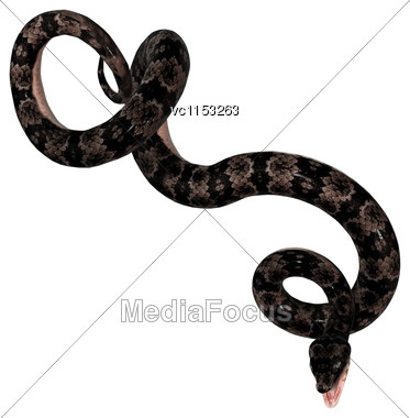 3D Digital Render Of A Cottonmouth Snake Isolated On White Background Stock Photo