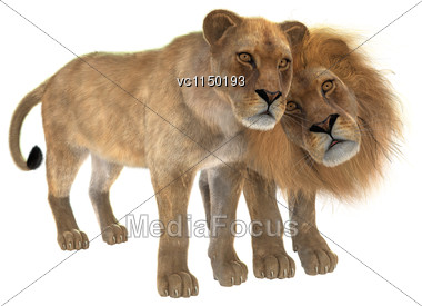 3D Digital Render Of A Couple Of Lions Isolated On White Background Stock Photo