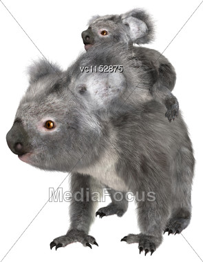 3D Digital Render Of A Cute Australian Koala Bear Carrying Baby Isolated On White Background Stock Photo