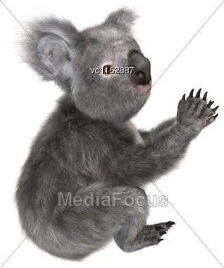 3D Digital Render Of A Cute Australian Koala Bear Isolated On White Background Stock Photo