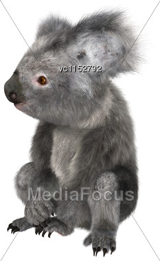 3D Digital Render Of A Cute Koala Sitting Isolated On White Background Stock Photo
