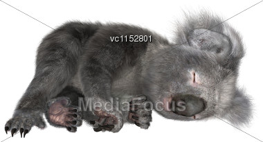 3D Digital Render Of A Cute Koala Sleeping Isolated On White Background Stock Photo