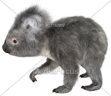 3D Digital Render Of A Cute Koala Walking Isolated On White Background Stock Photo