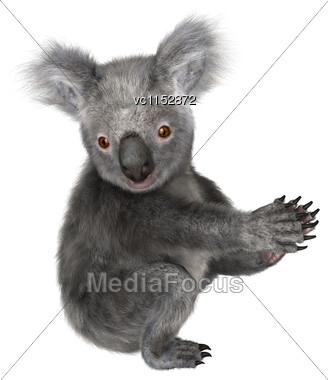 3D Digital Render Of A Cute Koala Isolated On White Background Stock Photo