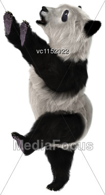 3D Digital Render Of A Cute Panda Bear Cub Isolated On White Background Stock Photo
