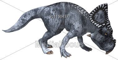 3D Digital Render Of A Dinosaur Protoceratops Isolated On White Background Stock Photo