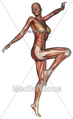 3D Digital Render Of An Exercising Female Anatomy Figure With Muscles Map Isolated On White Background Stock Photo