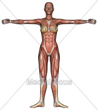 3D Digital Render Female Anatomy Figure Muscles Map - Stock Image ...