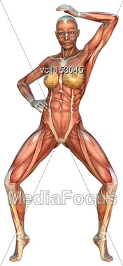 3D Digital Render Of A Female Figure With Muscle Maps Isolated On White Background Stock Photo