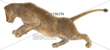 3D Digital Render Of A Female Lion Climbing Isolated On White Background Stock Photo