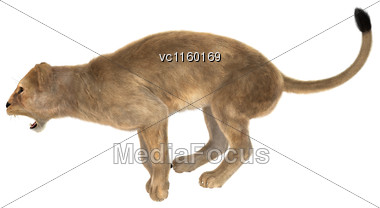 3D Digital Render Of A Female Lion Jumping Isolated On White Background Stock Photo
