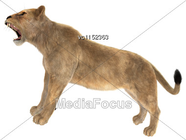 3D Digital Render Of A Female Lion Roaring Isolated On White Background Stock Photo