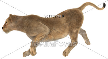 3D Digital Render Of A Female Lion Running Isolated On White Background Stock Photo