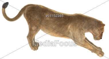 3D Digital Render Of A Female Lion Stretching Isolated On White Background Stock Photo