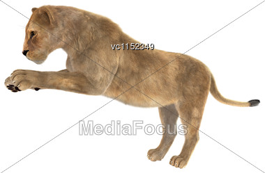 3D Digital Render Of A Female Lion Isolated On White Background Stock Photo