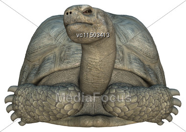 3D Digital Render Of A Galapagos Tortoise Iaolated On White Background Stock Photo