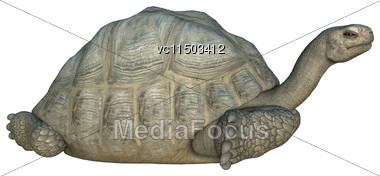 3D Digital Render Of A Galapagos Tortoise Isolated On White Background Stock Photo