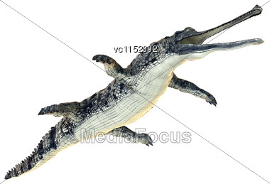 3D Digital Render Of A Gharial Or Gavialis Gangeticus, Or Gavial, Or Fish-eating Crocodile Isolated On White Background Stock Photo