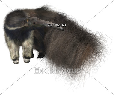 3D Digital Render Of A Giant Anteater Isolated On White Background Stock Photo
