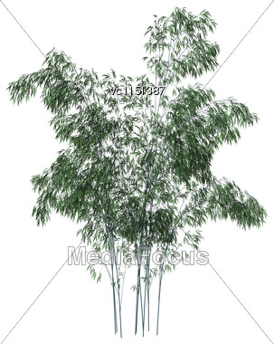 3D Digital Render Of Greeen Bamboo Trees Isolated On White Background Stock Photo