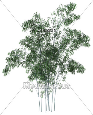 3D Digital Render Of Green Bamboo Trees Isolated On White Background Stock Photo