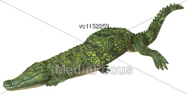 3D Digital Render Of A Green Crocodile Diving Isolated On White Background Stock Photo