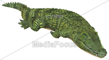 3D Digital Render Of A Green Crocodile Isolated On White Background Stock Photo