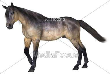 3D Digital Render Of A Grulla Horse Isolated On White Background Stock Photo