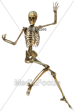 3D Digital Render Of A Human Skeleton Isolated On White Background Stock Photo