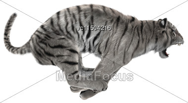 3D Digital Render Of A Hunting White Tiger Isolated On White Background Stock Photo