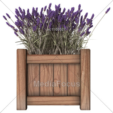 3D Digital Render Of A Lavender Planter Isolated On White Background Stock Photo