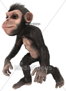 3D Digital Render Of A Little Chimpanzee Monkey Walking Isolated On White Background Stock Photo