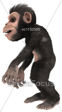 3D Digital Render Of A Little Chimpanzee Monkey Isolated On White Background Stock Photo