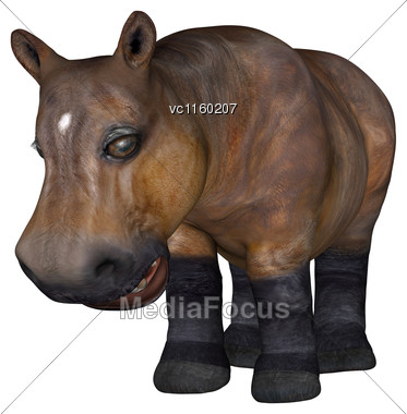 3D Digital Render Of A Little Hippo Isolated On White Background Stock Photo