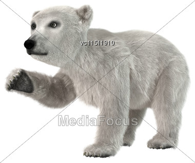 3D Digital Render Of A Little Polar Bear Isolated On White Background Stock Photo