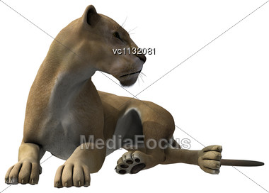 3D Digital Render Of A Lying Lioness Isolated On White Background Stock Photo
