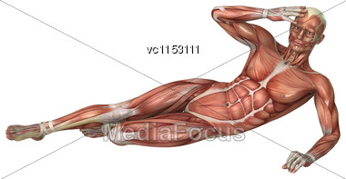 3D Digital Render Of A Male Figure With Muscle Maps Isolated On White Background Stock Photo